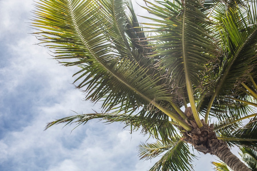 clouds-cloudy-skies-coconut-411217